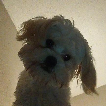 mocha selfie